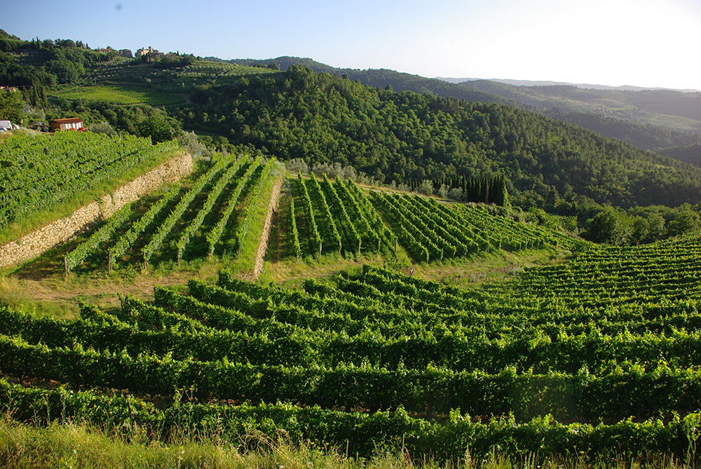 The vineyards of I Fabbri